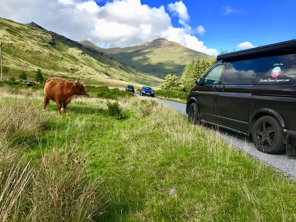 T6 camper on West Coast of Scotland meets Highland Cow North East 250