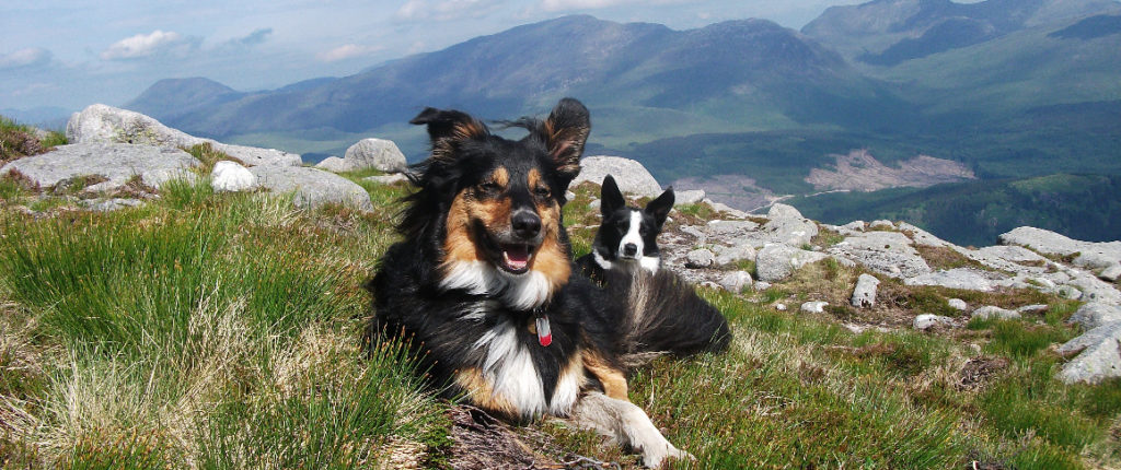 Dog walking when hiring a campervan in Scotland