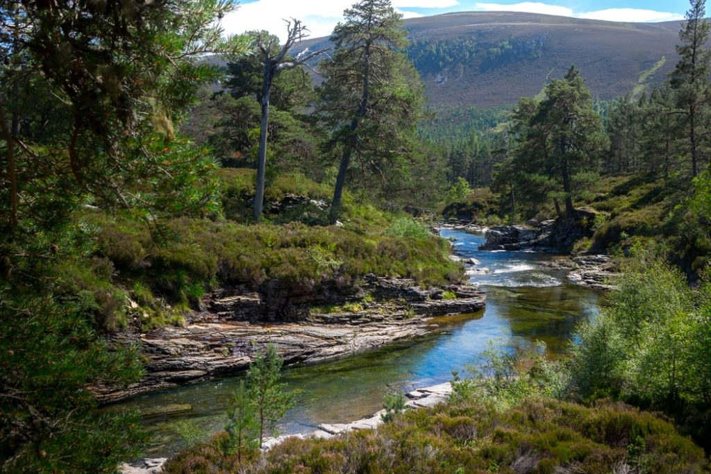 Dog walks Linn of Dee Braemar Campervan hire Scotland Deeside Classic Campers